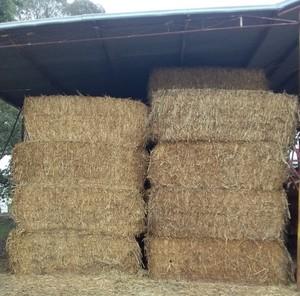 Shedded Canola Hay