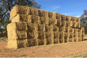 New Season Oaten Hay - approx. 75 x 8x4x3 bales