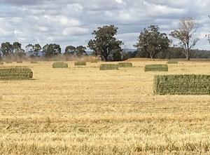 Wheaten and Barley Hay