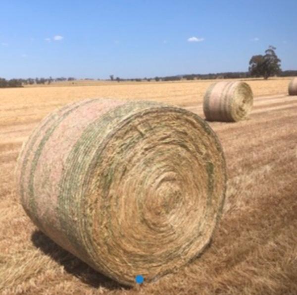 150 x Oaten/Rye hay 5x4 rolls