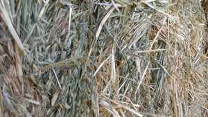200/mt Export Quality Oaten Hay