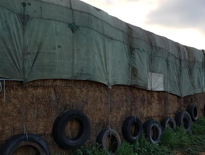 Wheaten Hay Large Squares