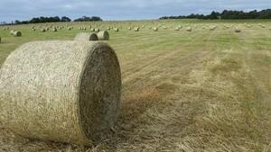 Rye/Clover round bales