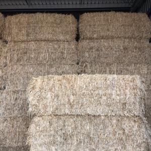 Barley Hay shedded