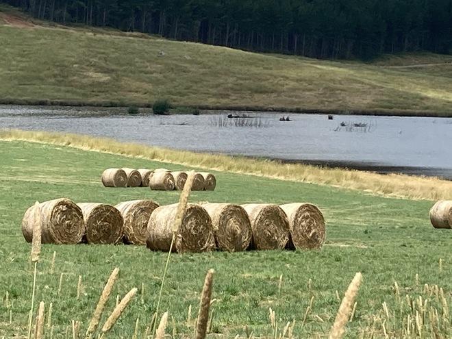 500 x Pasture Hay 5x4 Rolls
