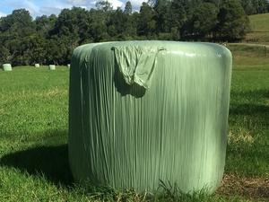20 Rolls Haylige Wrapped Certified Organic 4x4 Bales Pasture Haylige