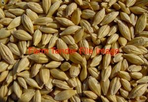 100 m/t of New Season Barley