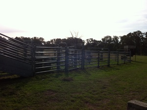 Cattle yard