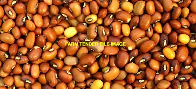 11mt Graded Red Caloona Cow Peas