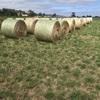 Lucerne Pasture Hay 4''x 5'' Rolls