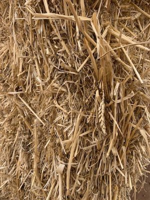Under Auction - (A135) - 'B' Double Loads of Wheaten Straw - 2% + GST Buyers Premium On All Lots