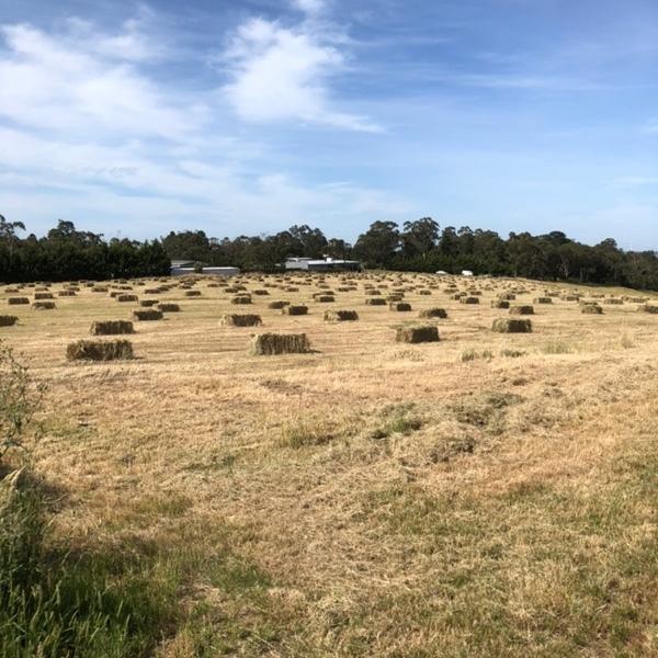 Small Square Hay (Mixture of Natives)