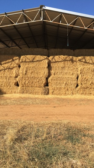 Organic Oat + Rye Hay For Sale