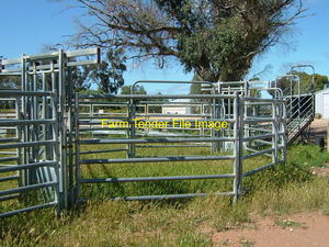 WANTED Cattle Yard Panels