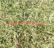 Pea Straw 5x4 Round delivered only