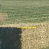 600 m/t Medic Hay x 550kg approx 8x4x3 bales ex farm