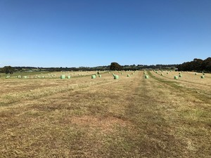 Pasture Silage Rolls