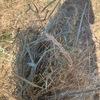 Rye dominant pasture hay