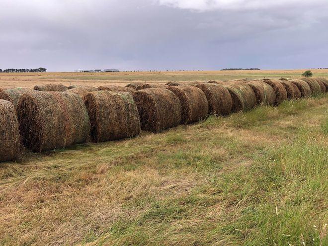 150 New Season Pure clover Hay 5X4 round bales