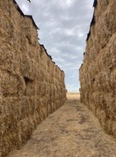 145t Wheaten Hay 8x4x3 Bales