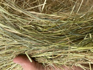 PASTURE (Meadow) HAY - Rolls - Horse Hay