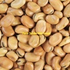 Faba Bean Seed 25Kg Bags