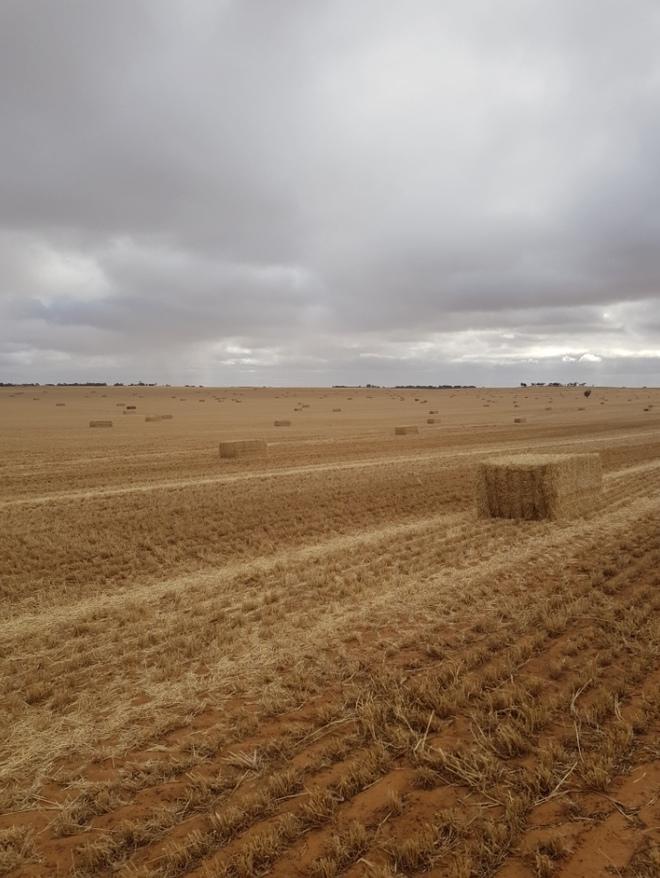 Barley Straw 500kg+ 8x4x3 Bales (19/20 Season)