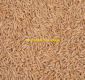29t of cleaned Oat seed for sale. It's 1000grain wt Good variety