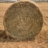 Oat Hay - Approximately 300 Rolls - SOLD BY THE ROLL