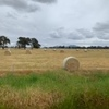Rye and Clover Pasture Hay  5x4 Bales, Net wrapped.