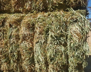 Barley Hay 700kg 8x4x3 Bales