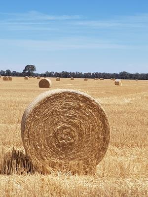 Wheaten Straw Rolls 2020 and 2021 Season No Rain Damage