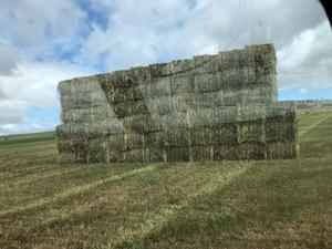 new season oaten vetch hay