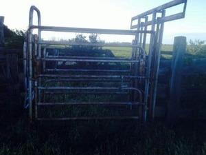 Cattle crush