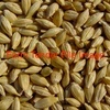 Feed Barley or Triticale wanted delivered to Tyaak near broadford