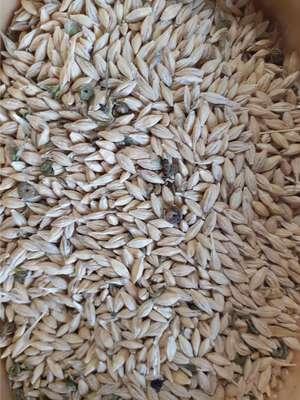 35mt Barley with Lucerne mix