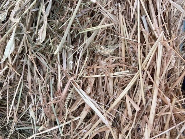 Wheaten hay, round bales, near Mortlake