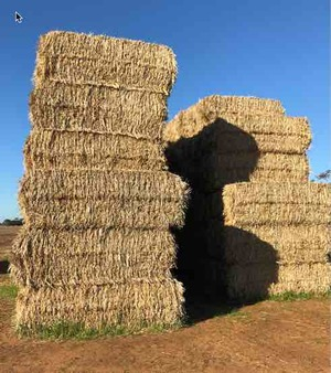 Windrowed Barley and Wheaten Straw