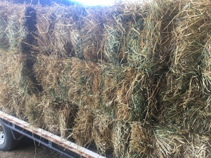 Small Squares of Ryegrass Hay