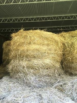 50 Rolls 4x4 Certified Organic Pasture Hay