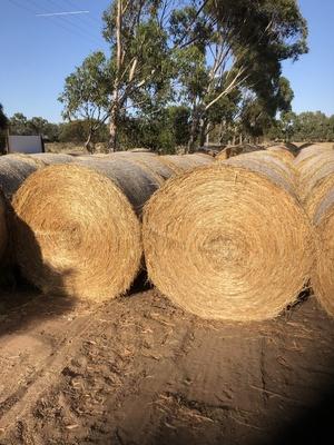 70 x Vetch/Rye/Wheat Hay 5x4 Rolls