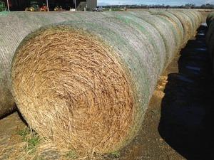 HAY- Pasture + 10-20% cereal