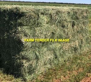 Teff Hay in Bale Baron packs