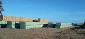 Wrapped Grass Silage For Sale 6x4x3's