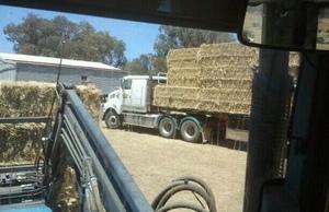 Good Quality Clover & Rye Hay
