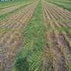 110mt Oaten Hay 8x4x3 Bales (New Season)