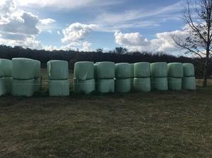 66 x Millet Silage 4x4 Round Bales