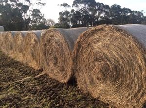 Grass Hay Round Bales