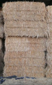 For Sale Oaten Hay Ex Farm Carisbrook 200 Bales