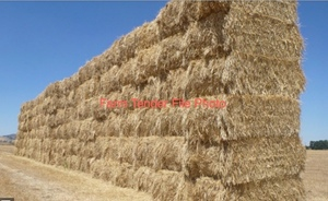 Wheaten/rye/balansa hay
